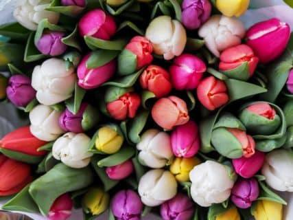 Le printemps est là ! Conseils Feng-Shui pour « aérer » votre intérieur…