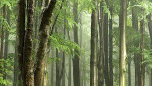 La Forêt et l'Eau