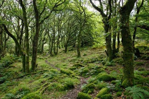 Le comportement social des arbres