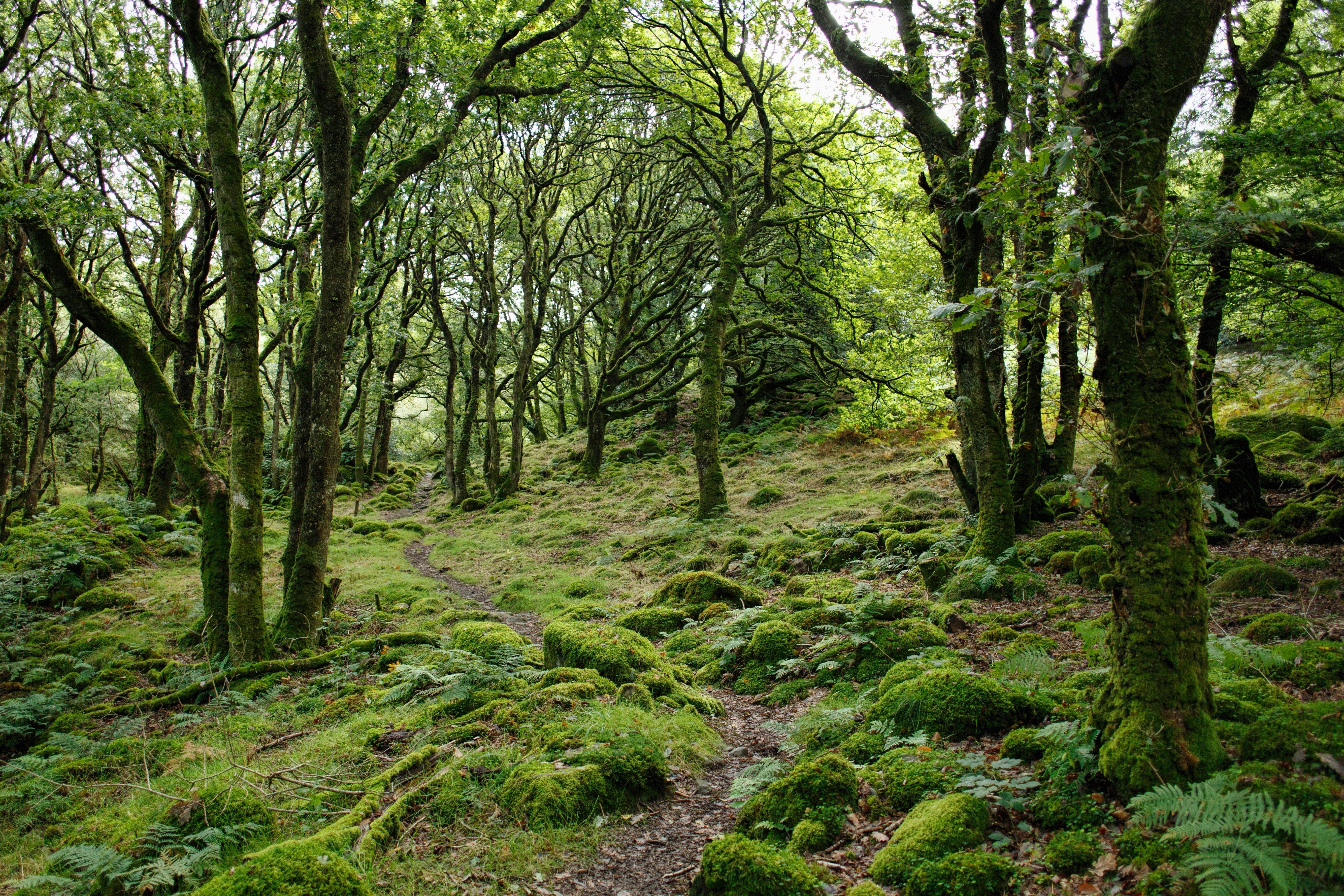 forêt bien-être santé géobiologie