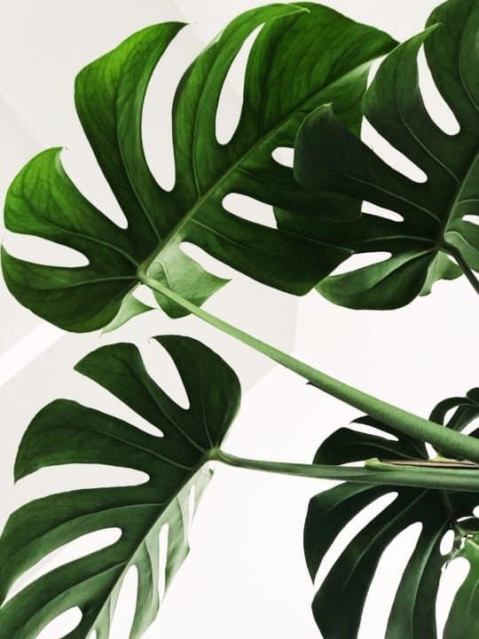 Les plantes et leur action dépolluante
